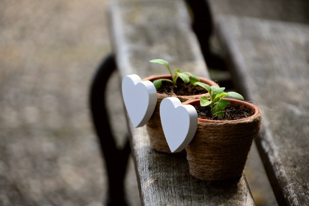 gift plants dubai